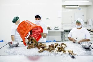Fiskefabrik – Honduras